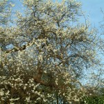 Spring (Uxbridge)